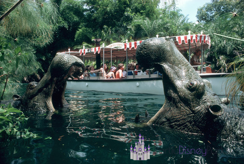 Jungle Cruise Departed Disney Parks